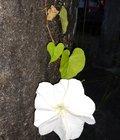 Rutt Santos