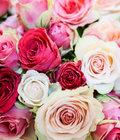 Chuva de Rosas