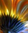 Flowerliz